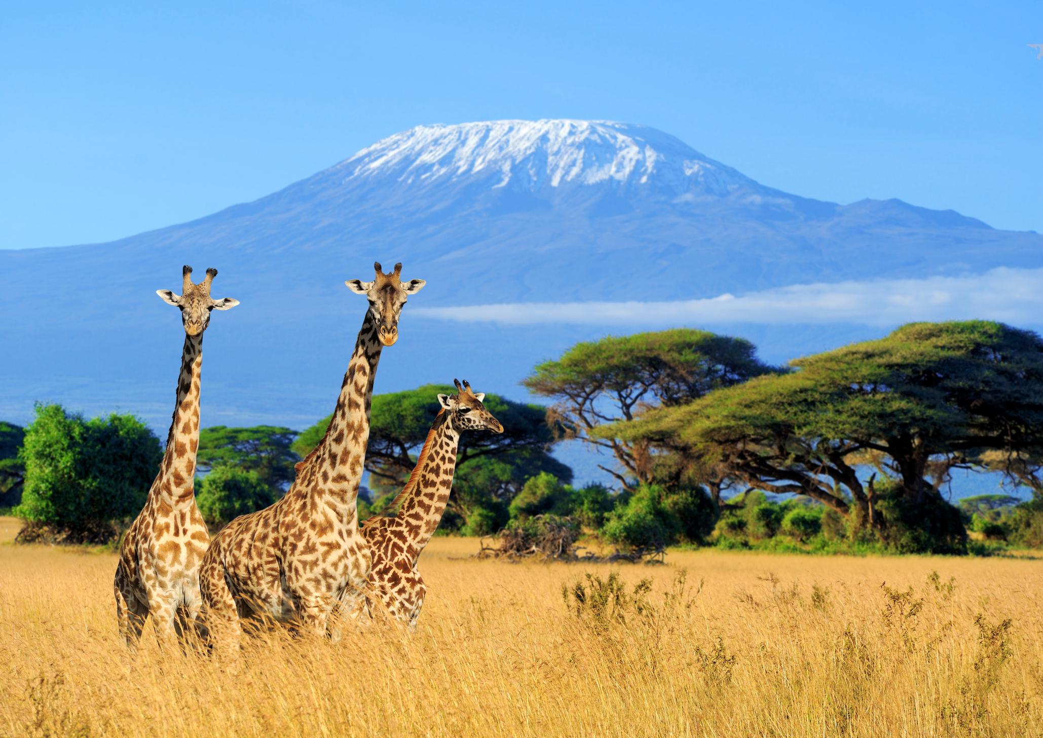 climb-mount-kilimanjaro-machame-route