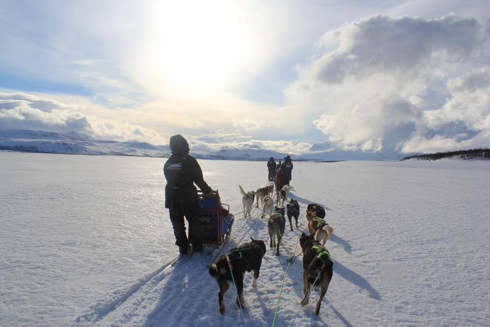 dogsledding-norway