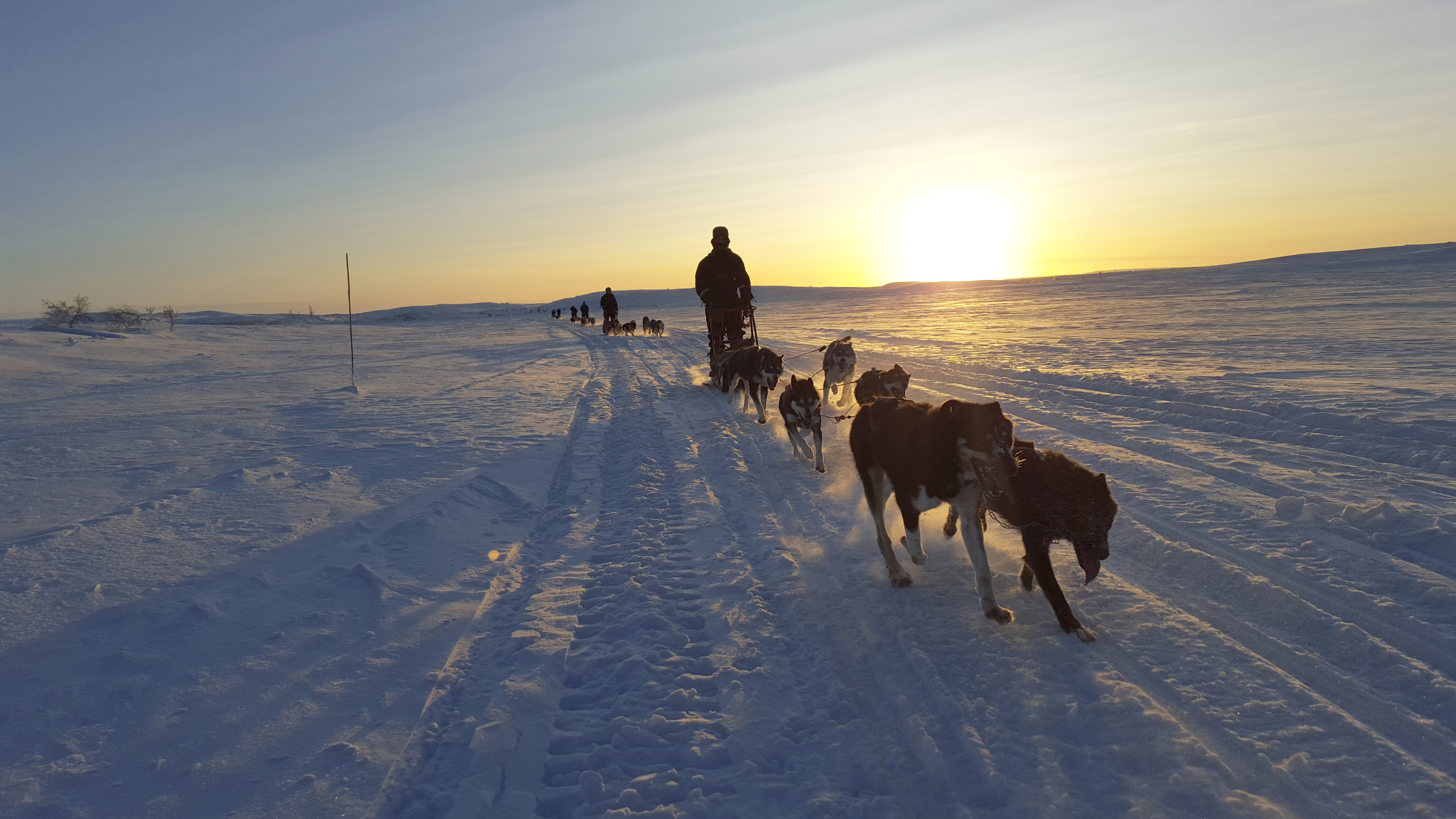 dog-sledding-norway-easter-adventure