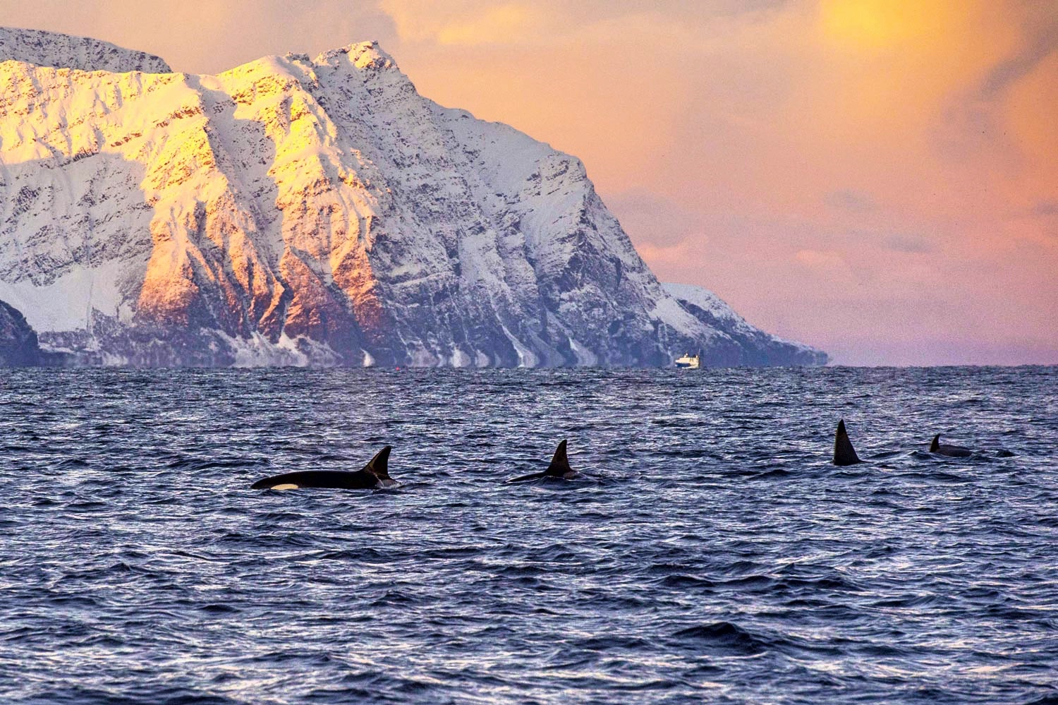 whale-watching-norway
