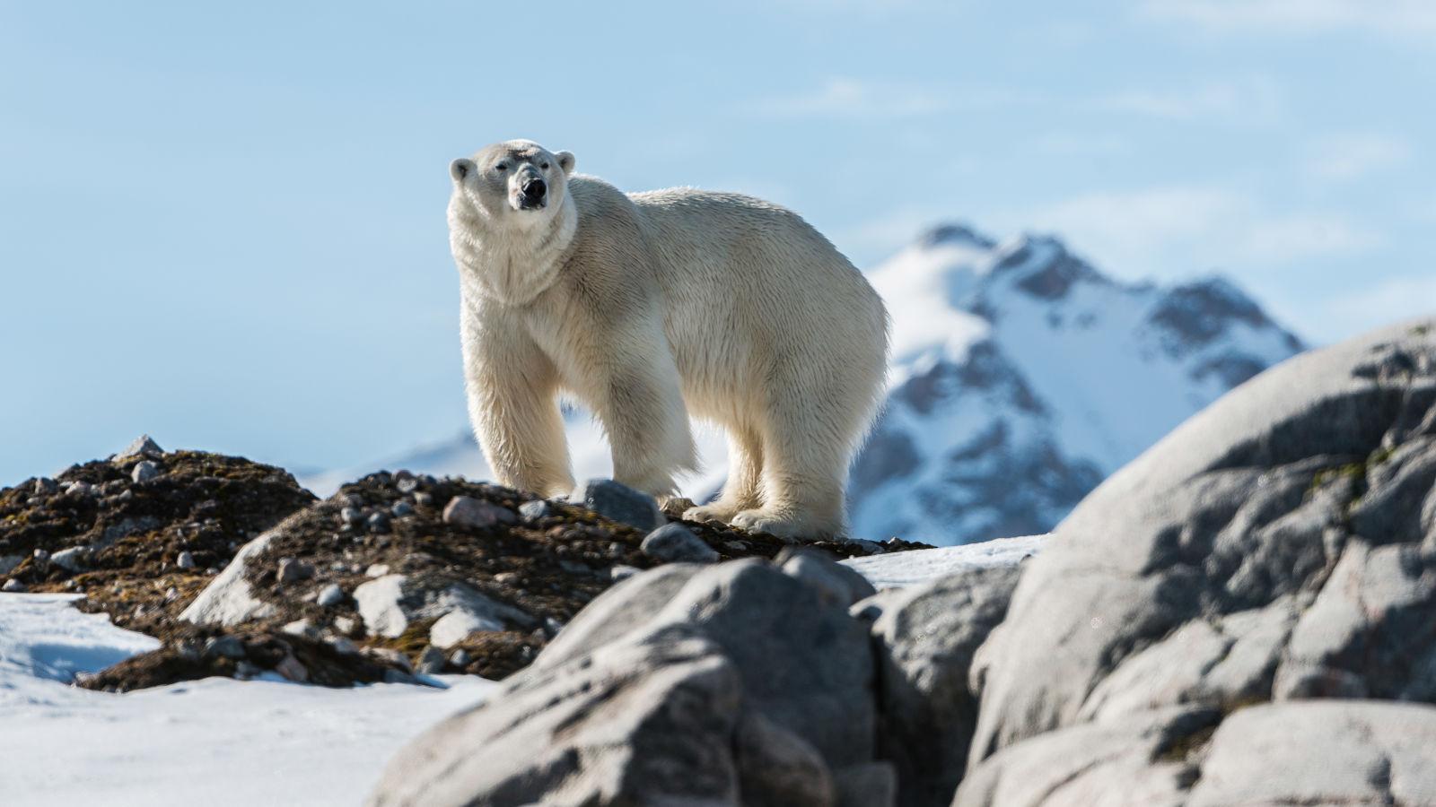 Greenland adventure holidays